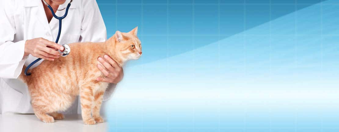 Feline examinations