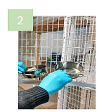 Remove dishes, toys, litterbox