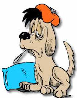 Dog Flu Is Not Kennel Cough