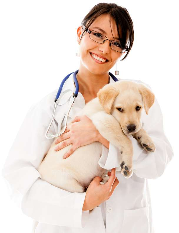 Responsible Pet Owners take their pets to the vet