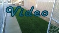 Pet Turf Video